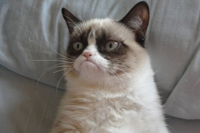 Animals___Cats_Grumpy_cat__043849_